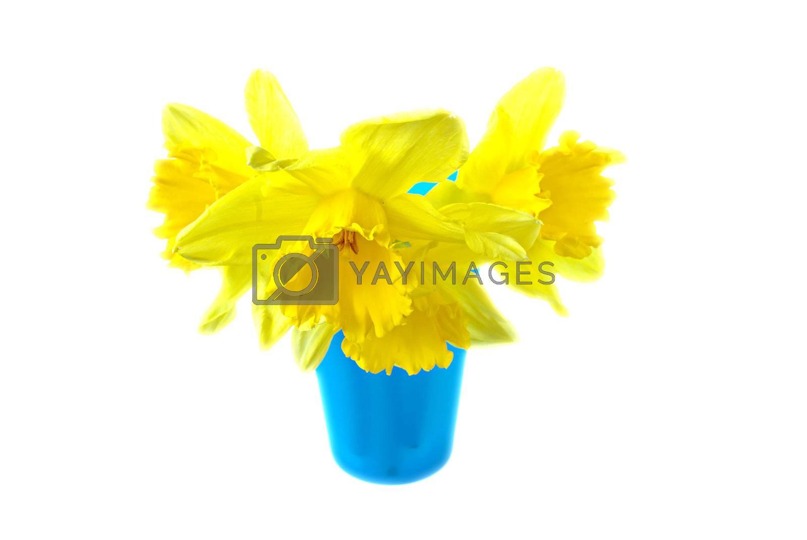 Daffodils in blue vase by Kertesz
