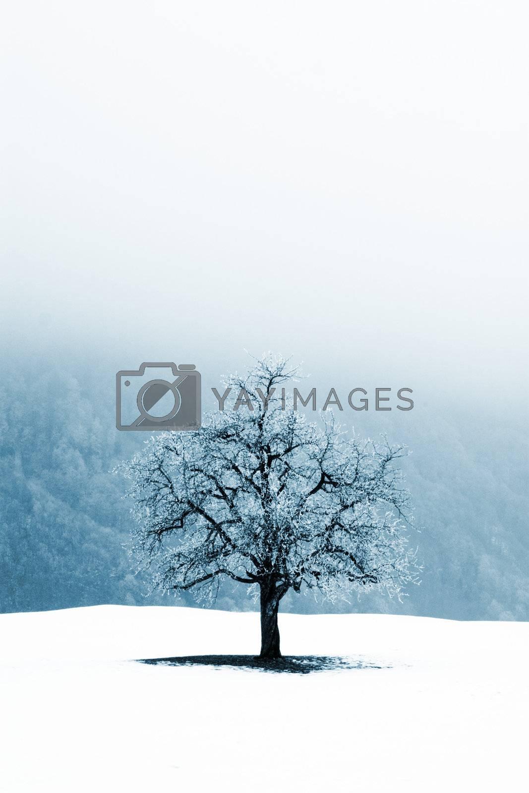Lonely tree in foggy winter scene