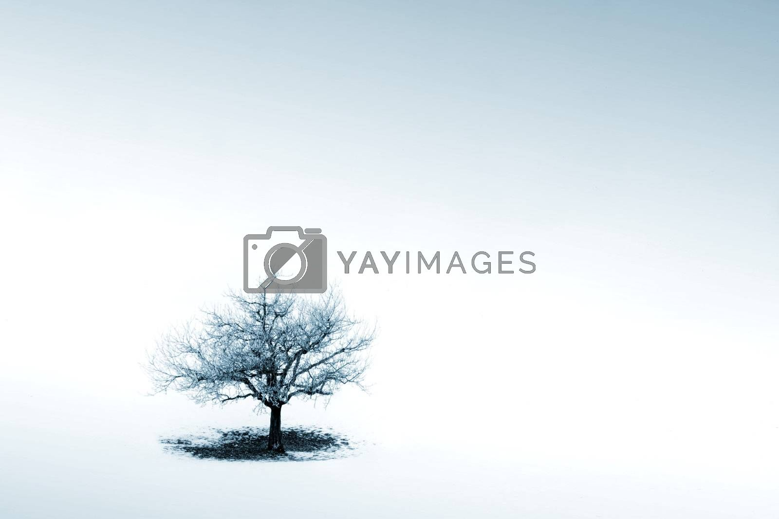 Royalty free image of Loneliness by ajn