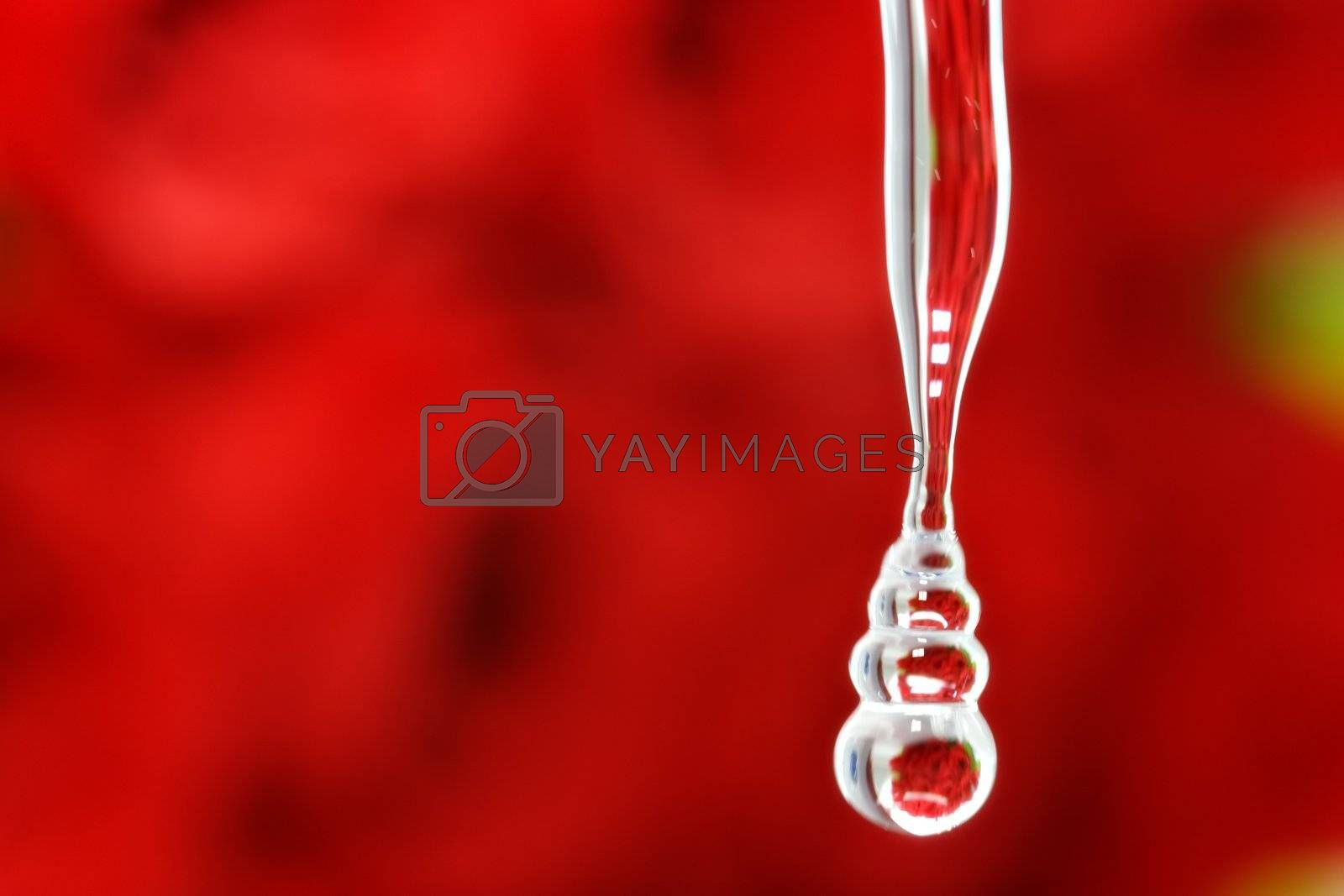 Roses reflected on water drop