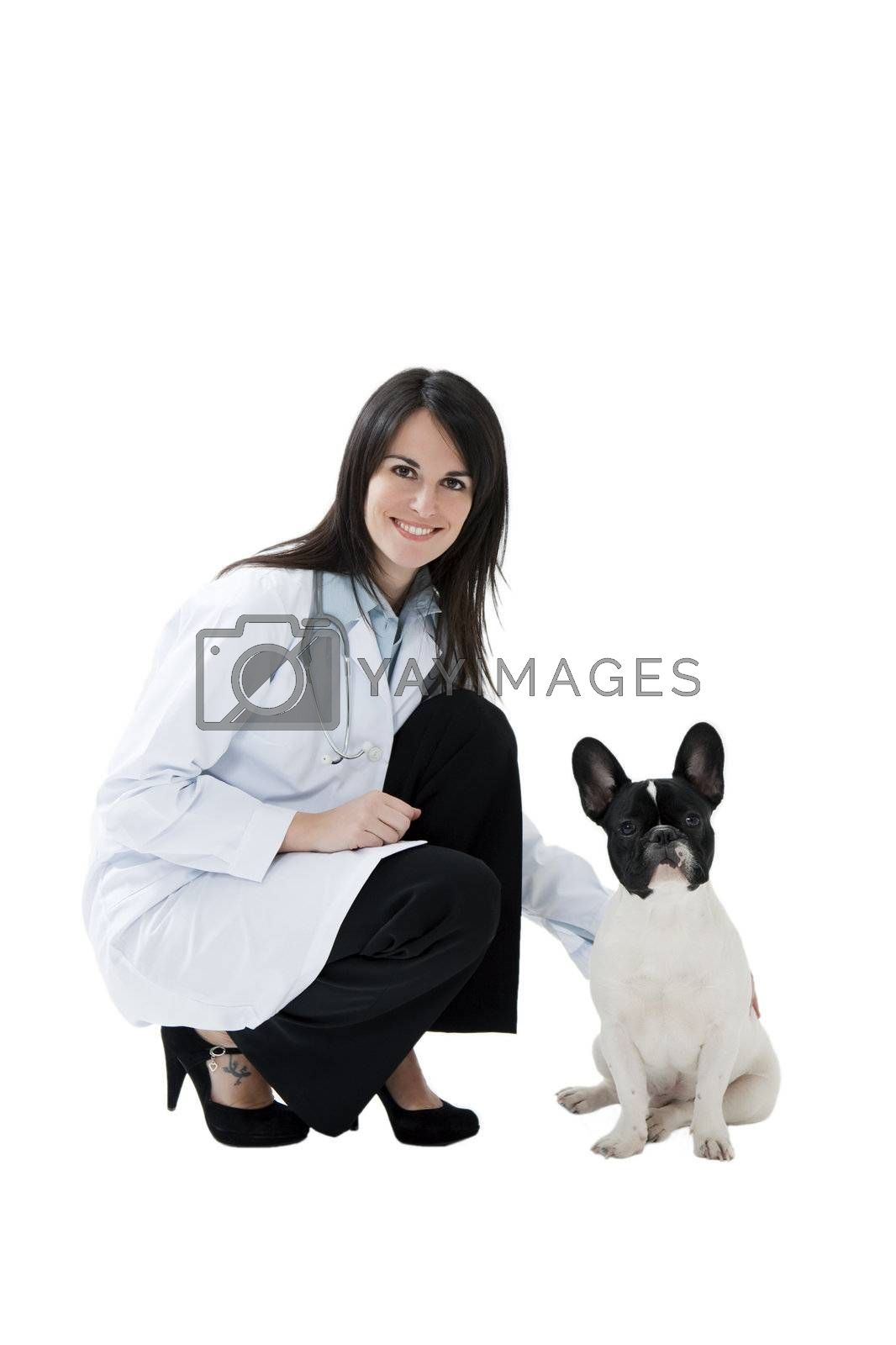 mid adult veterinarian and french bulldog on white background