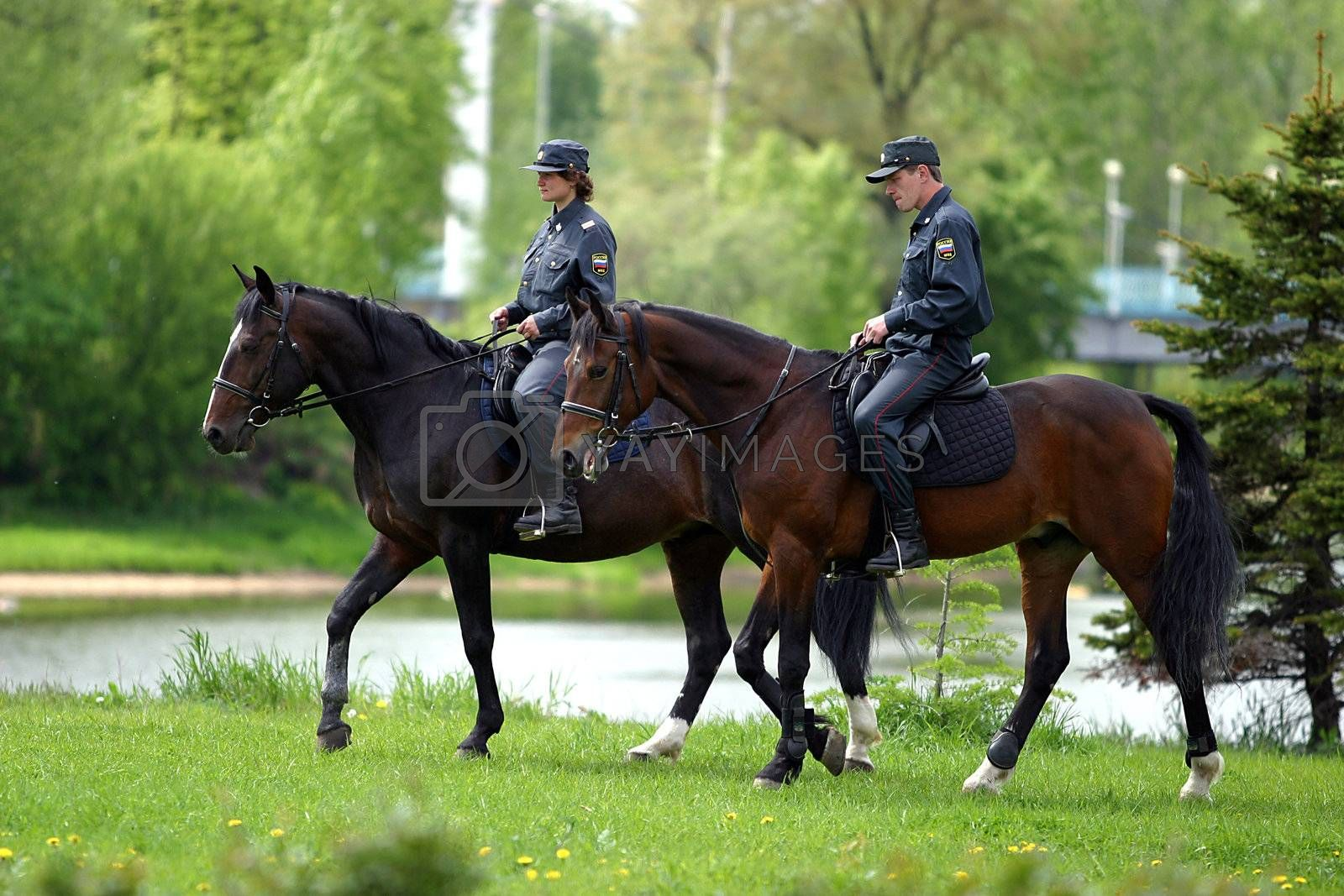 The Russian policeman on brown horses