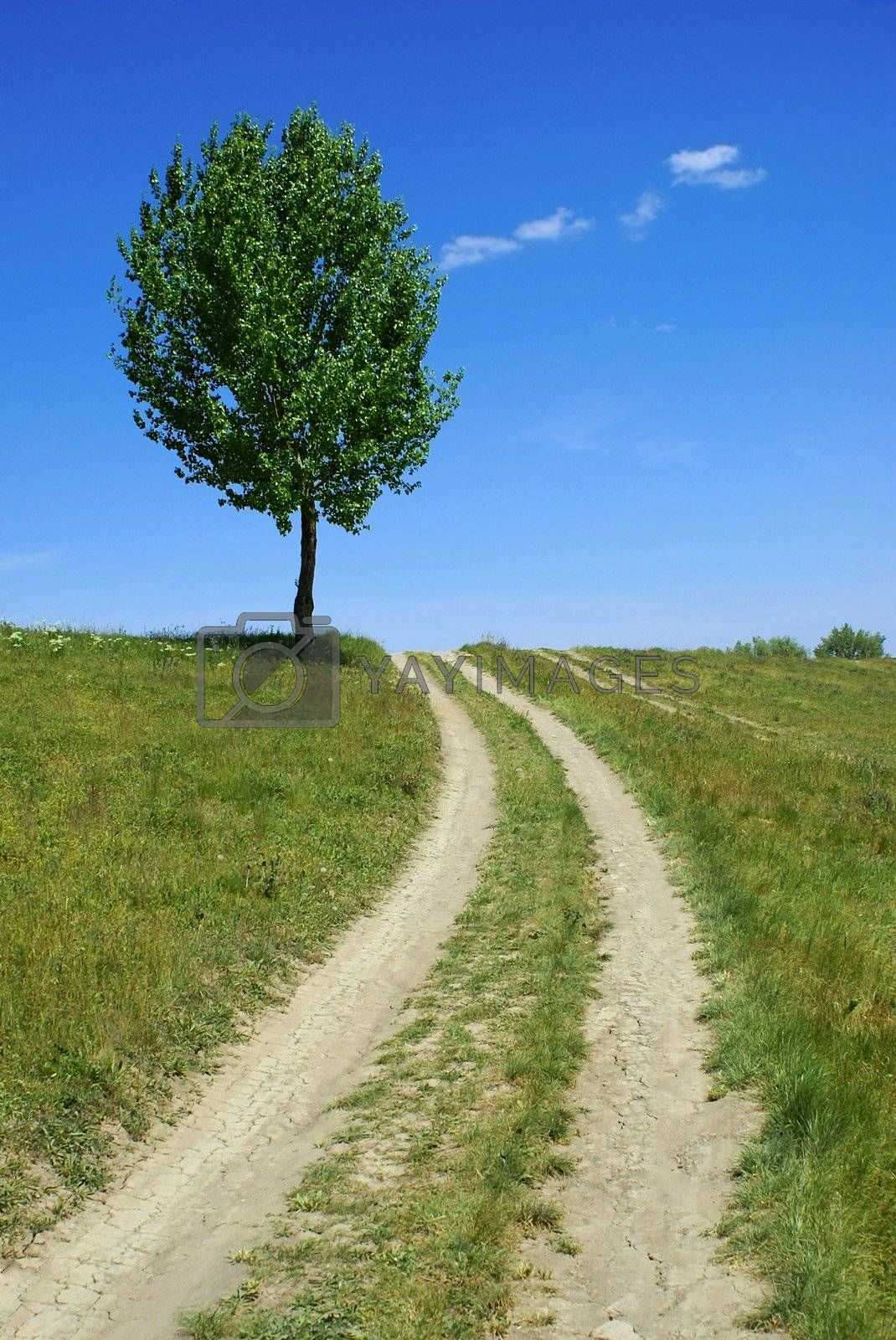 dirty road tree - green fields, paths, the blue sky, mountain