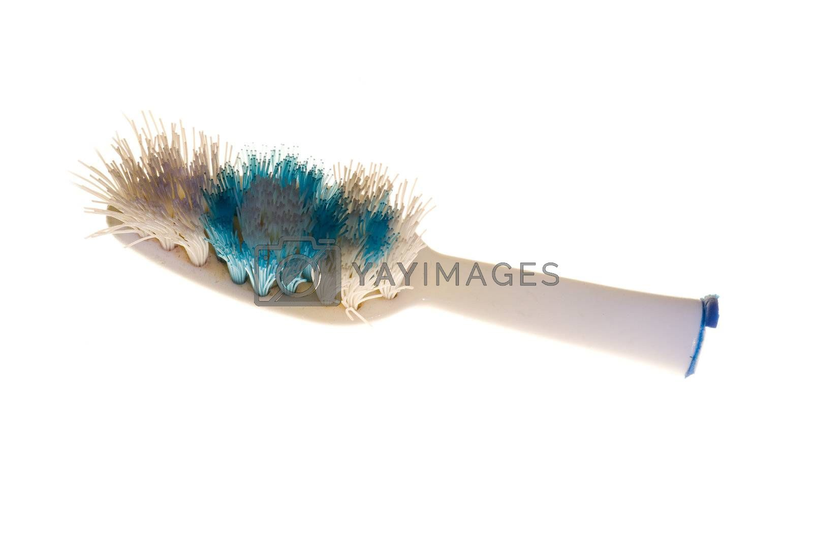 Royalty free image of Broken toothbrush by elwynn
