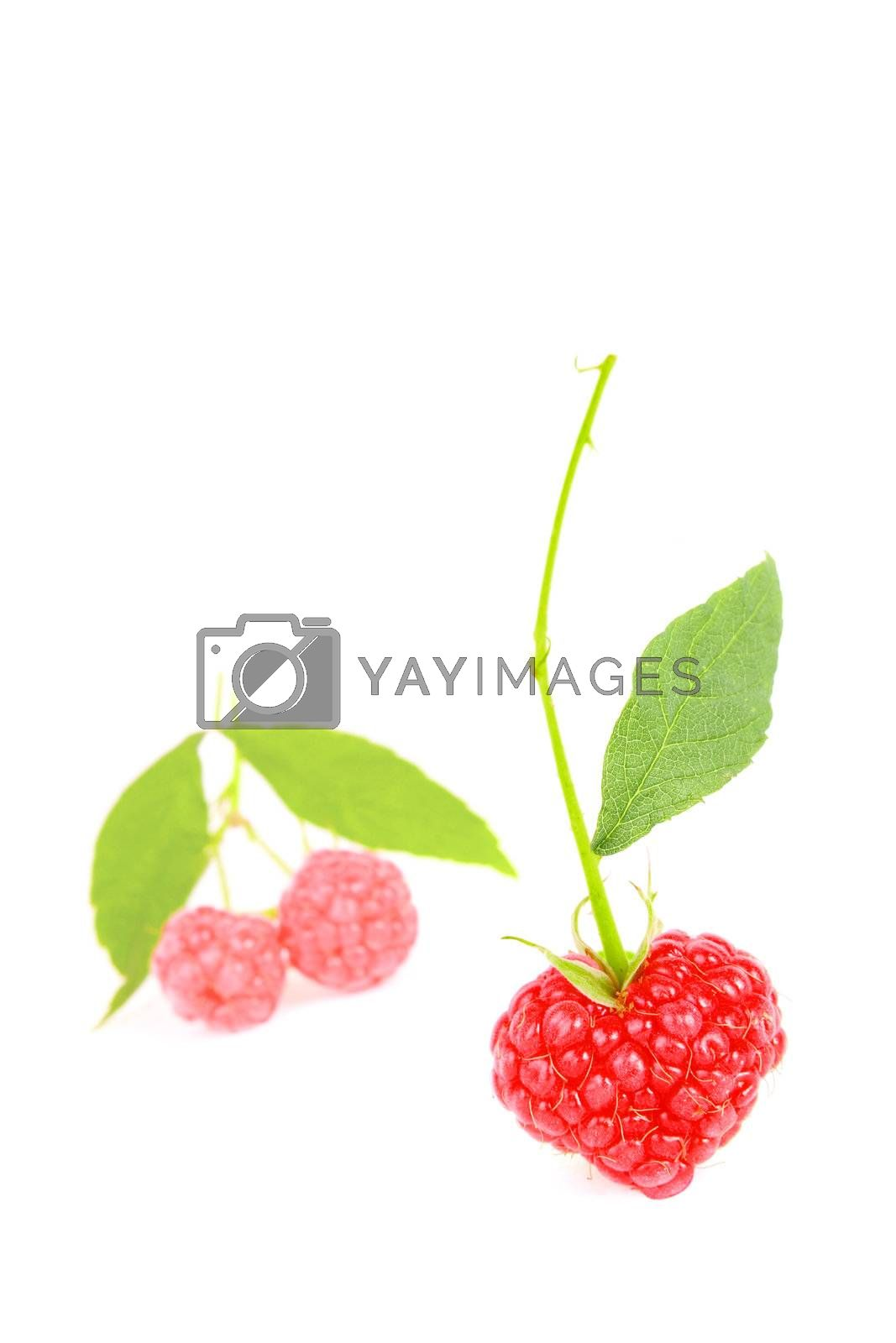 A heart shaped raspberry isolated on white