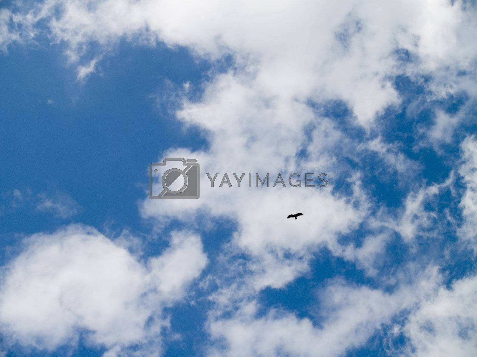 The blue sky, beautiful white clouds and bird