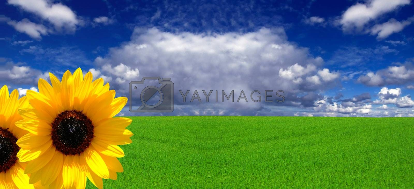 Conceptual image showing amazing blue skies over green meadows