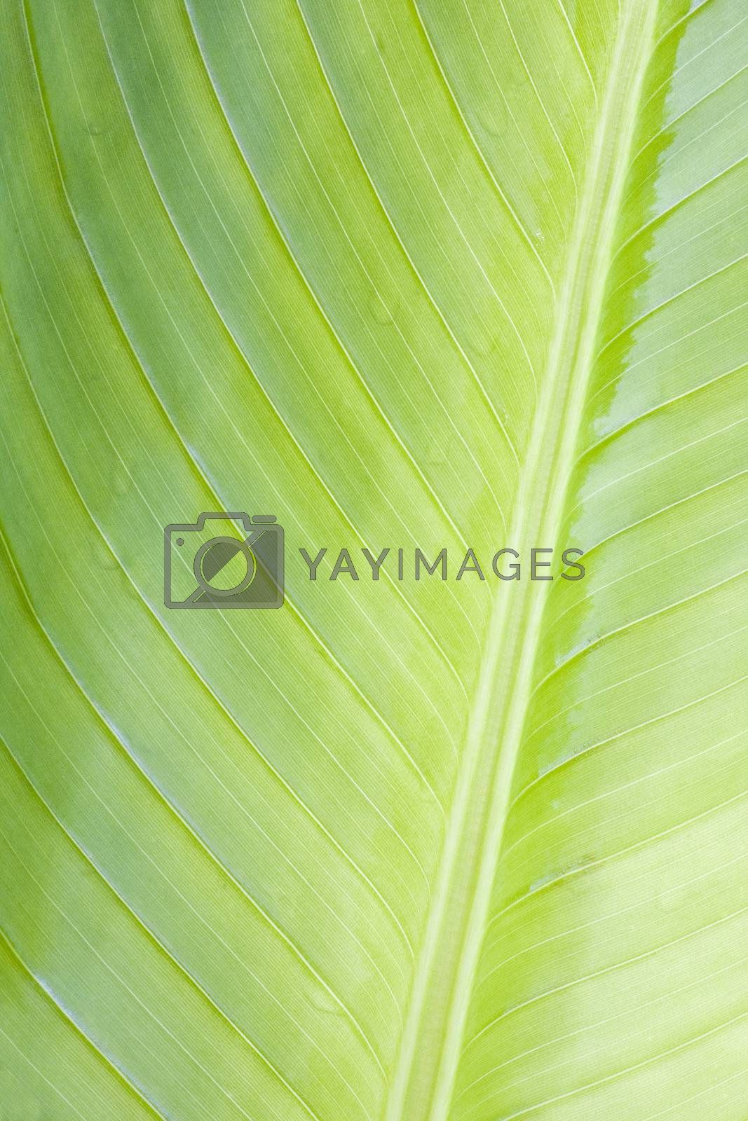 Close-up of a leave of a tropical plant in Brazil