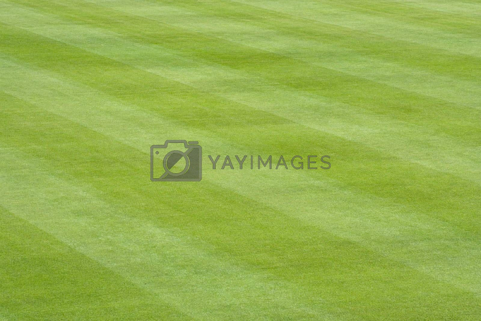 The freshly cut striped grass of a baseball field.