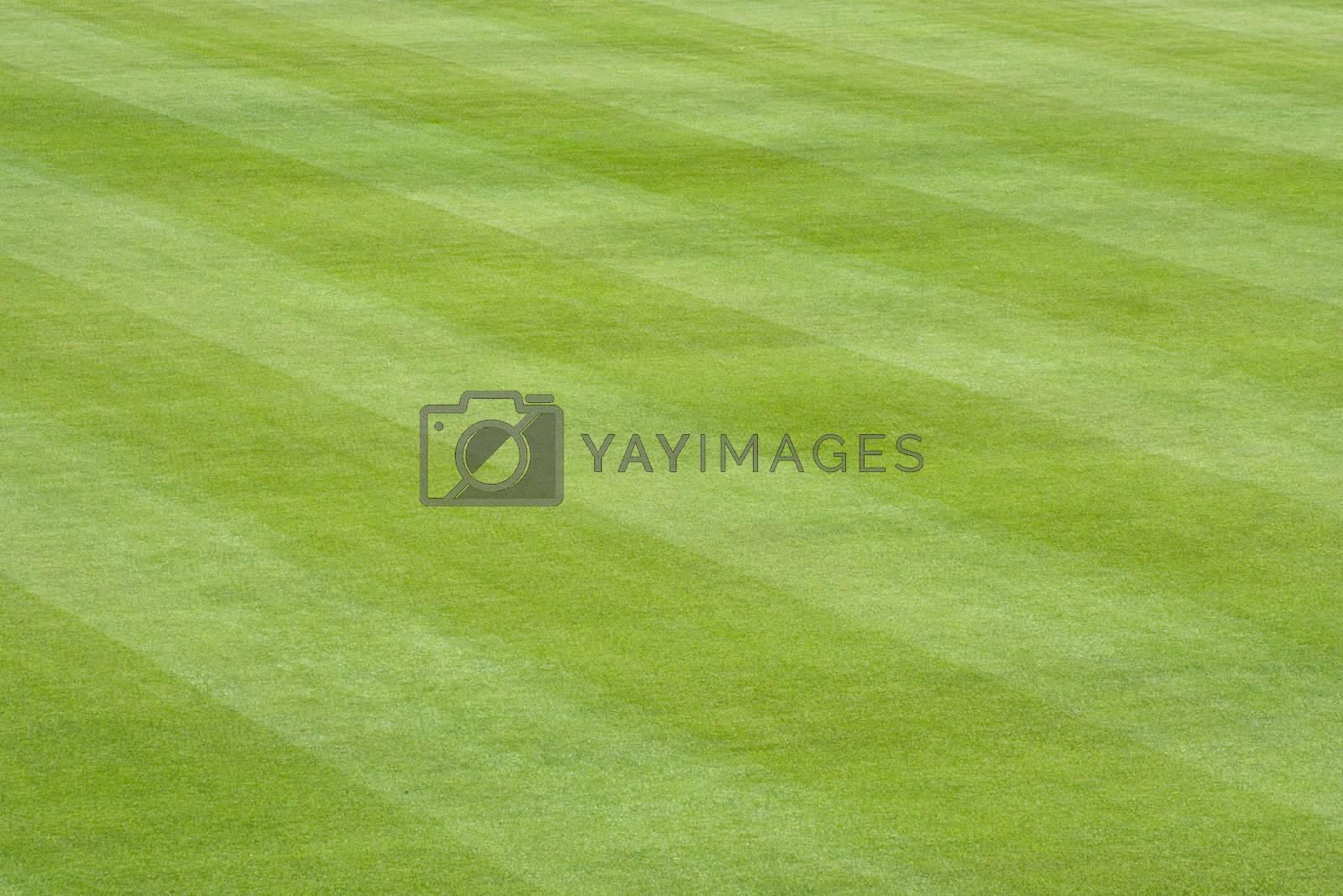 Baseball Field Grass by jclardy