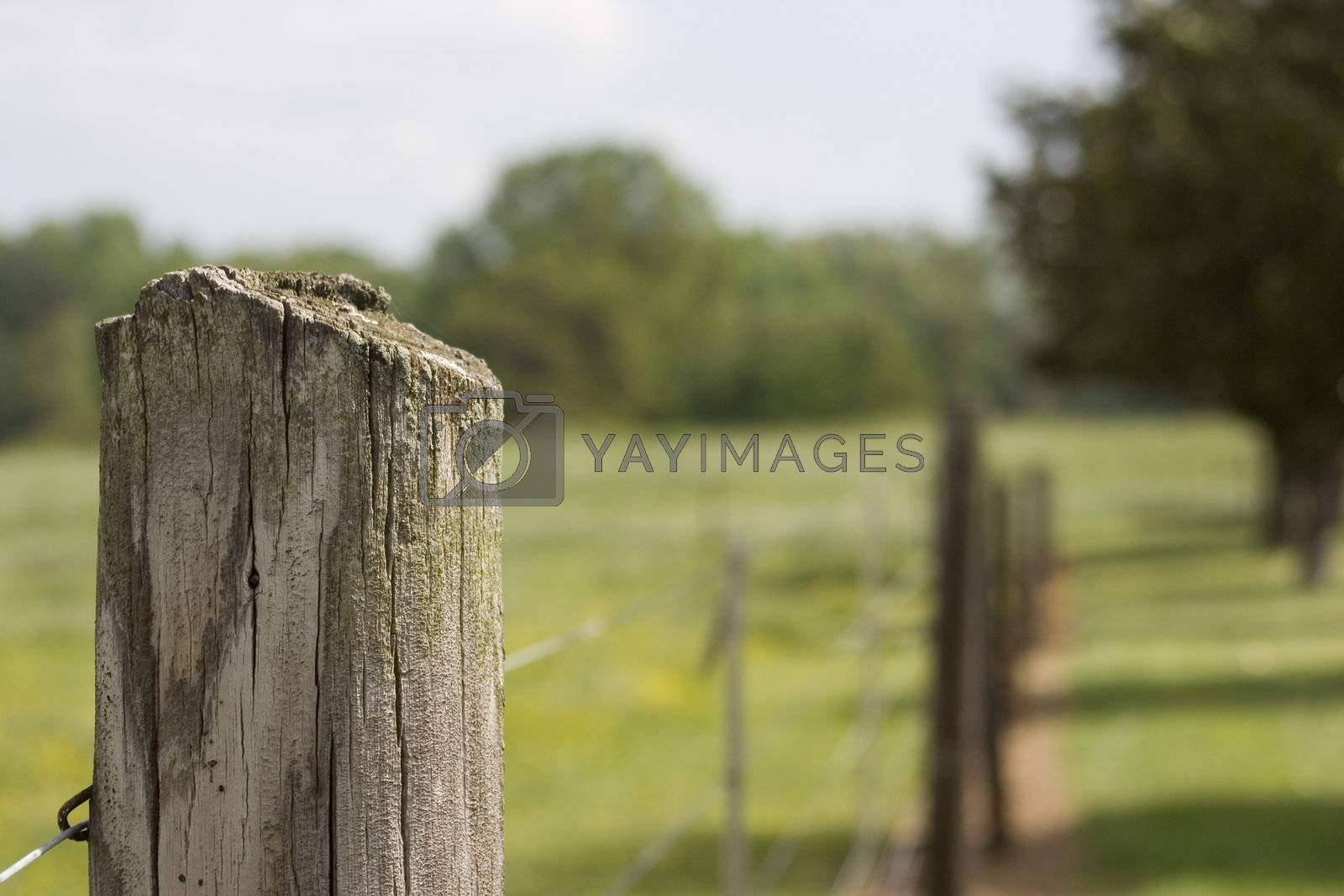 A wooden post for an electric fence with shallow depth of field.