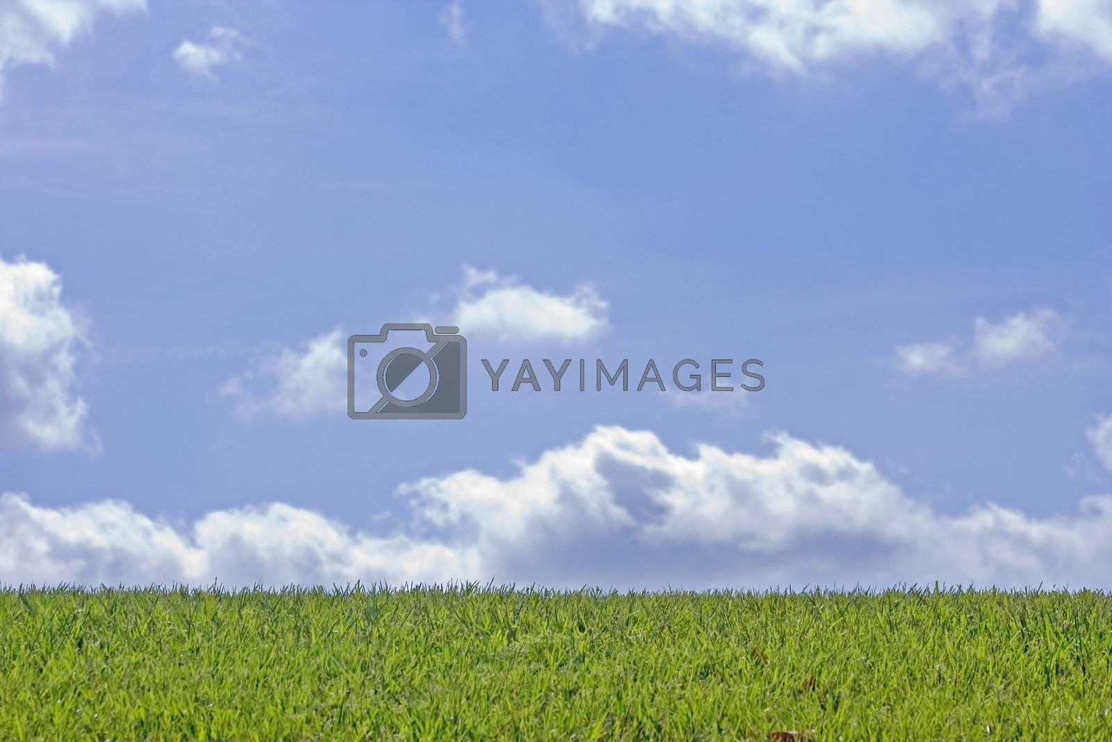 Blue Skies by jclardy
