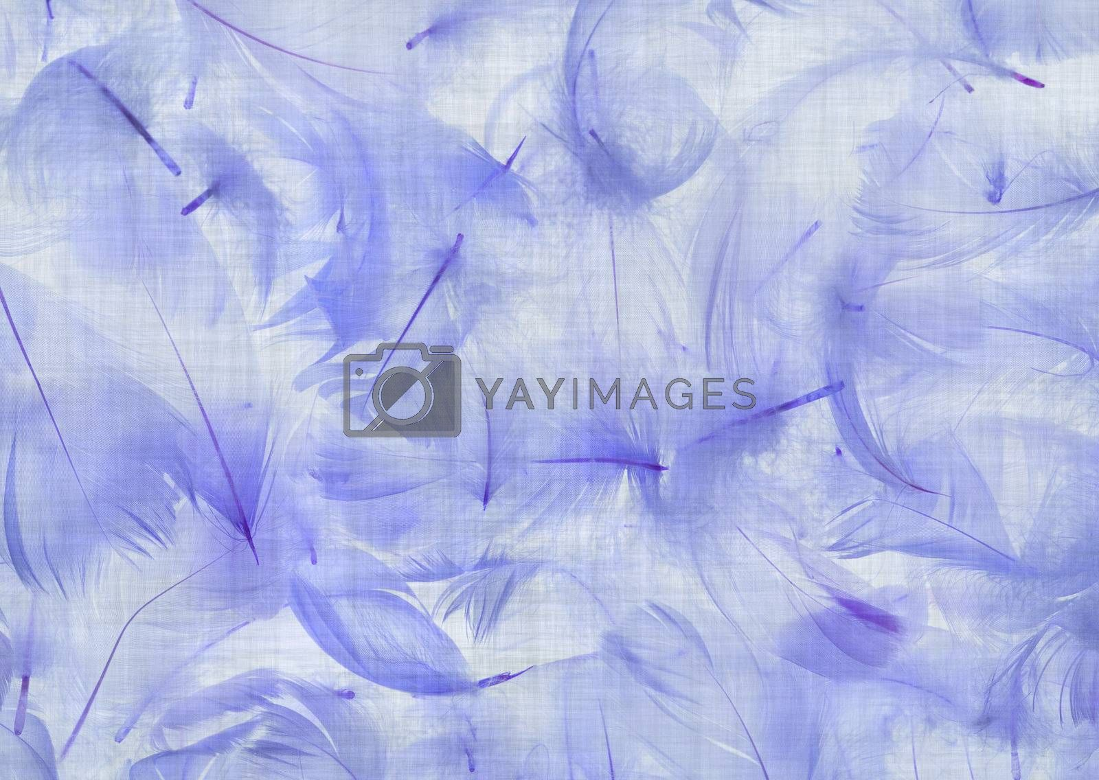 Blue feathers combined with grungy background