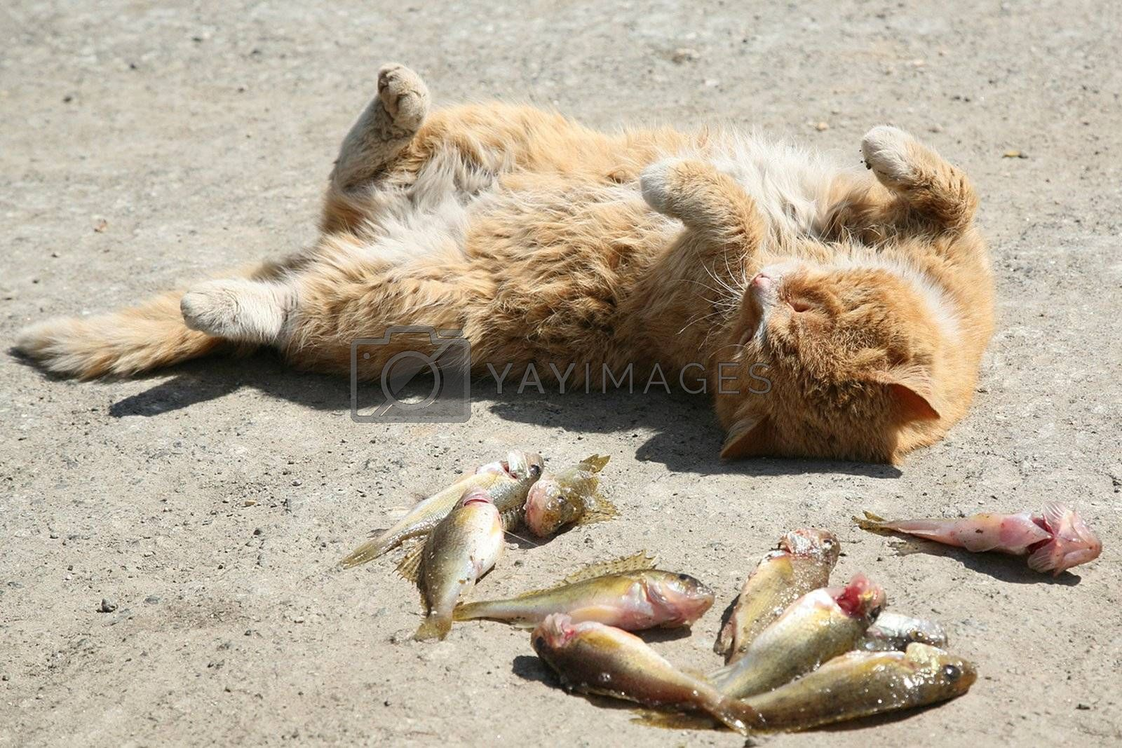 cat and fish  by skutin