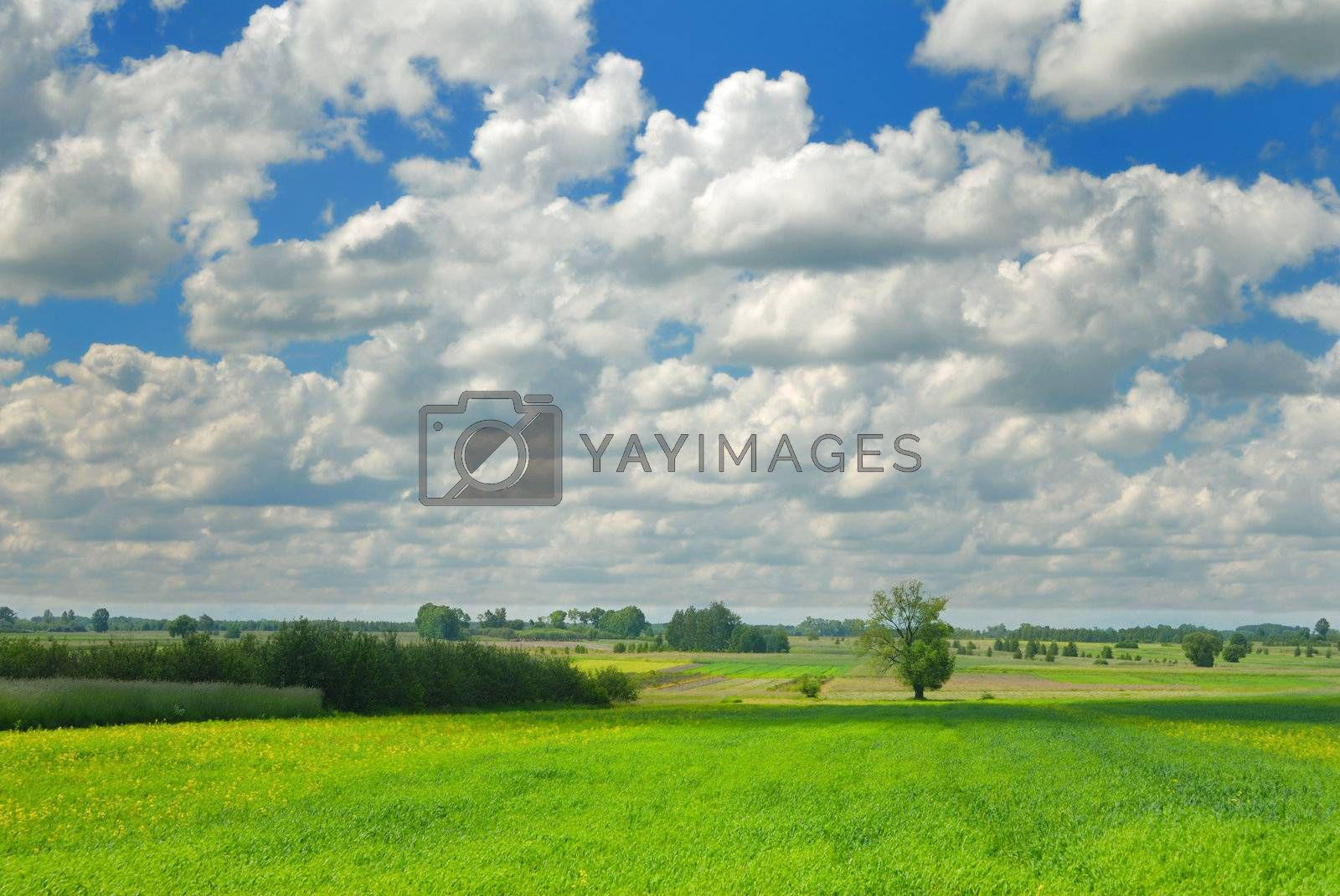 Summer landscape: Green meadow and sky with clouds