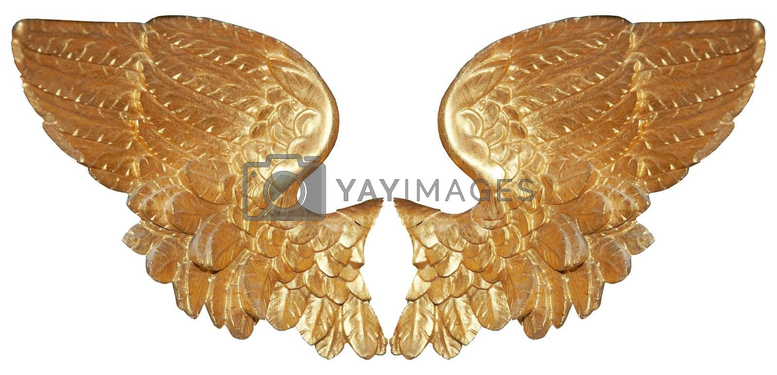 Isolated golden angel wings on white background