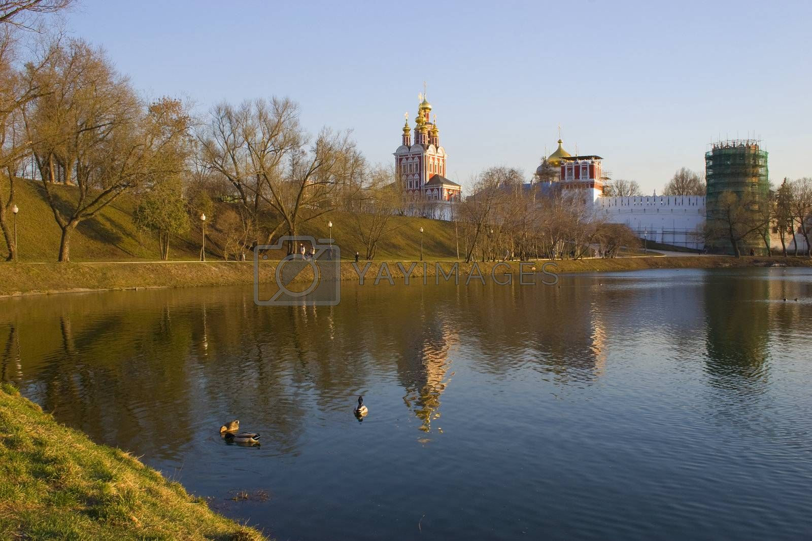 Park in the city. Wild duck swiming in pond at spring time. Moscow, Russia.