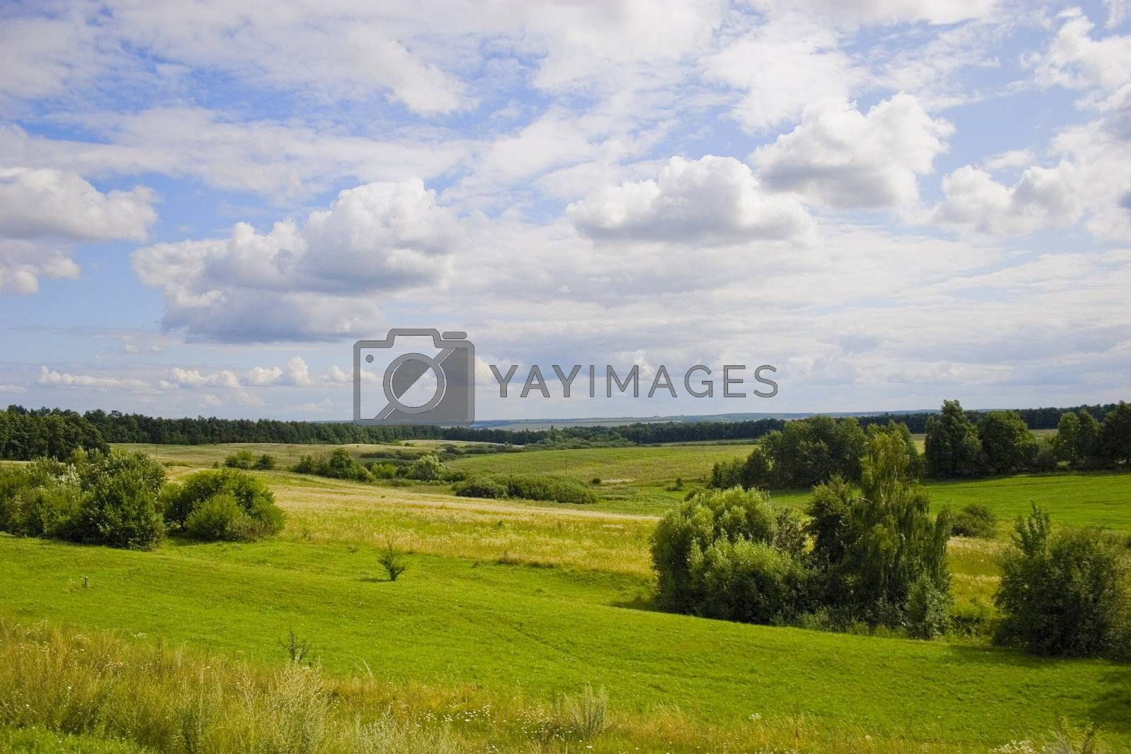 Tree on meadow with forest and blue sky with clouds. Summer's landscape. Russia.