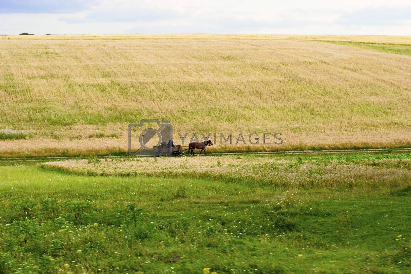 Woman going on cart at rural area. Summer's landscape. Russia.