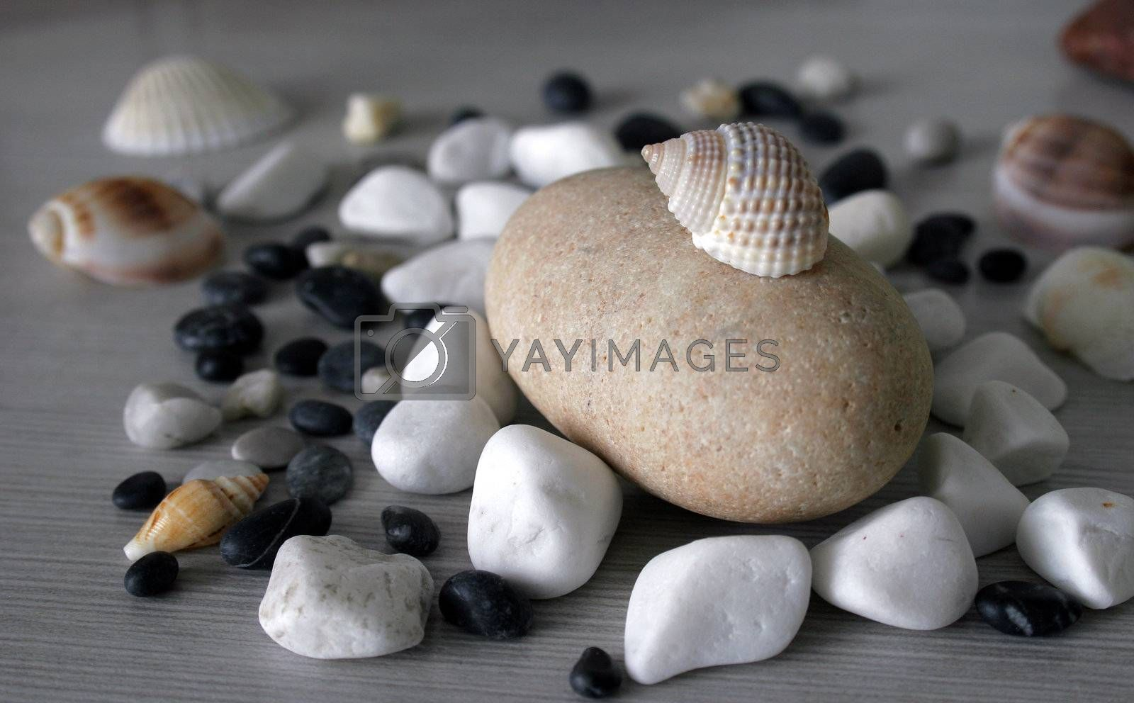 Sea symbols and creative forms and elements