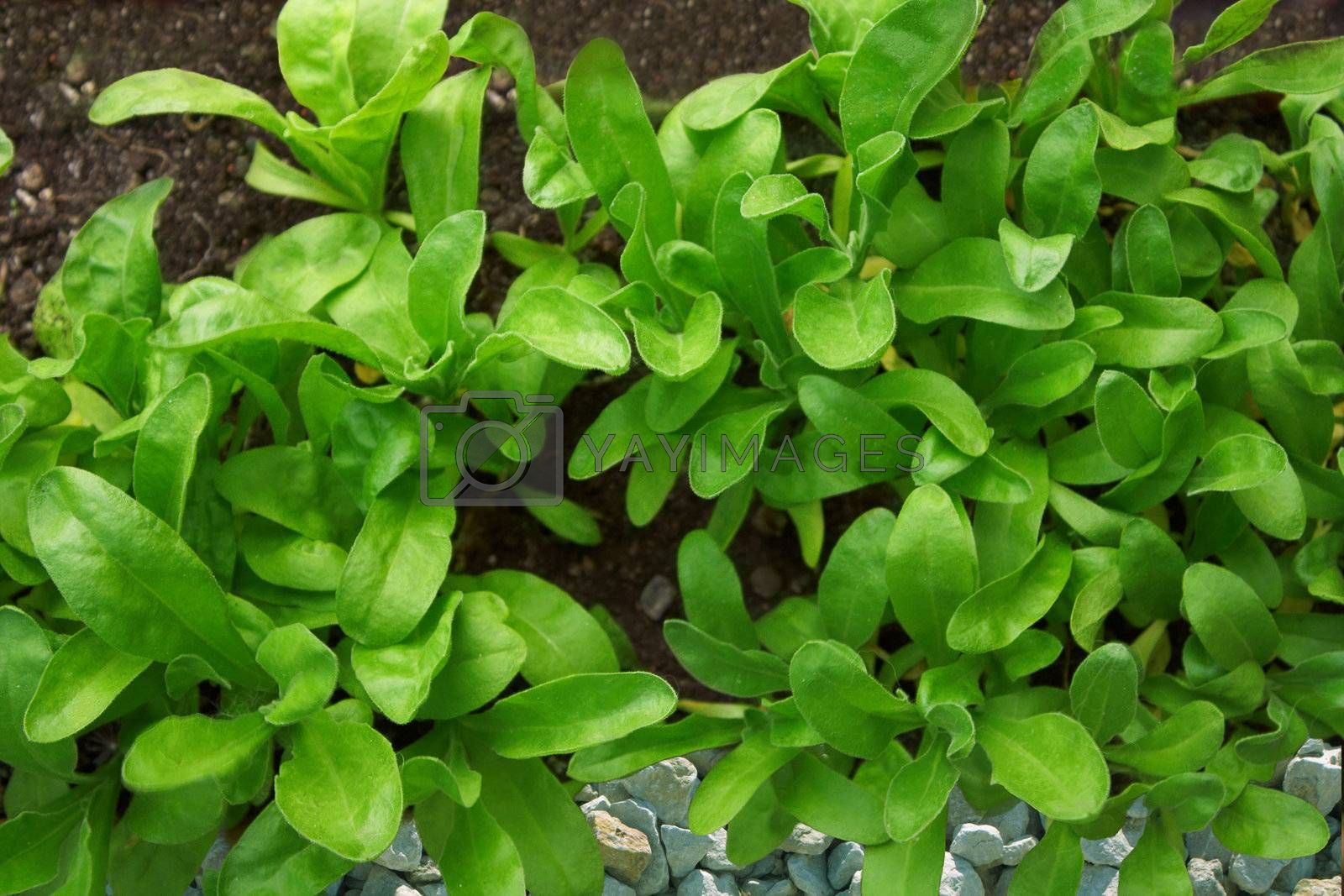 Green leaves on a stone and earthen background