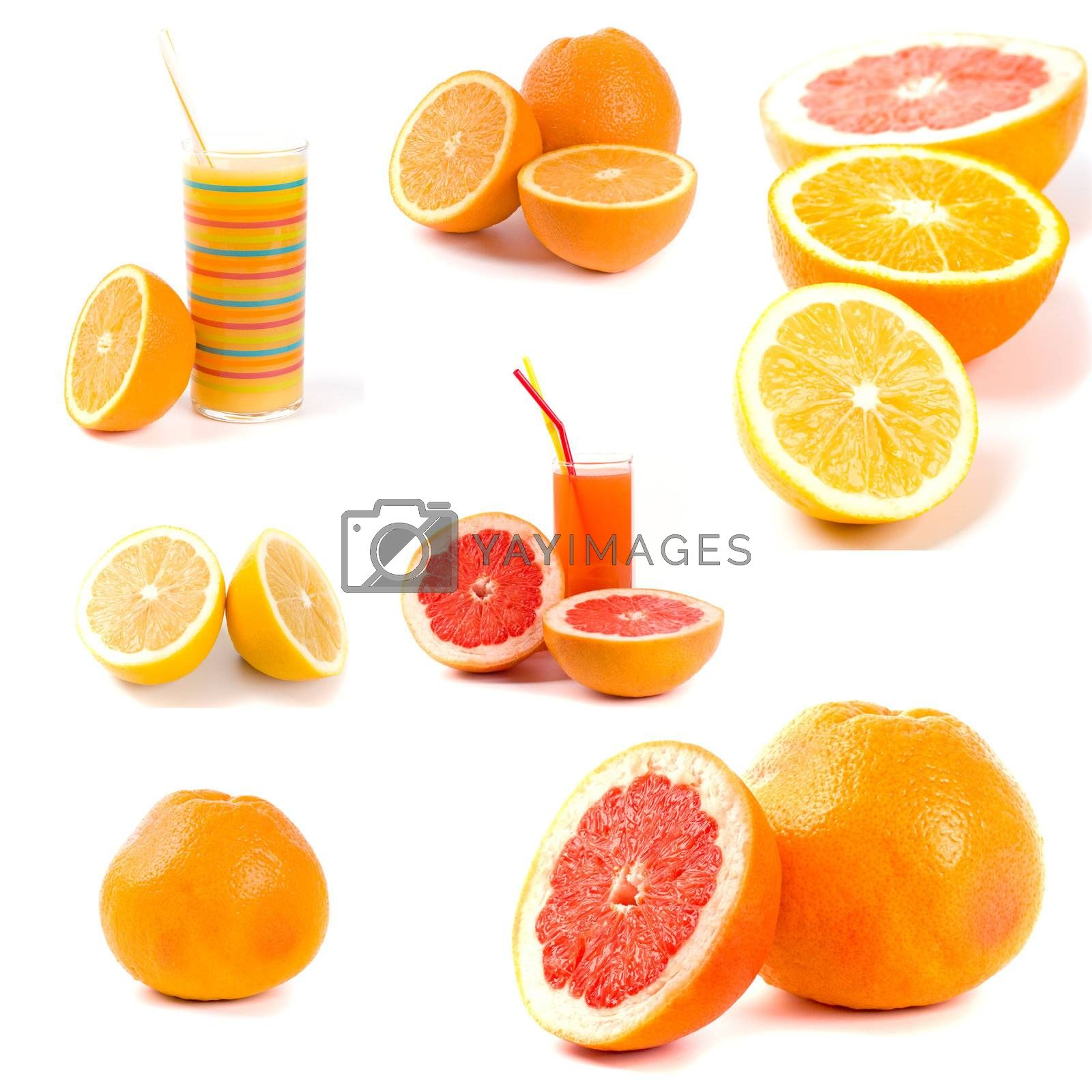 citrus collection by marylooo