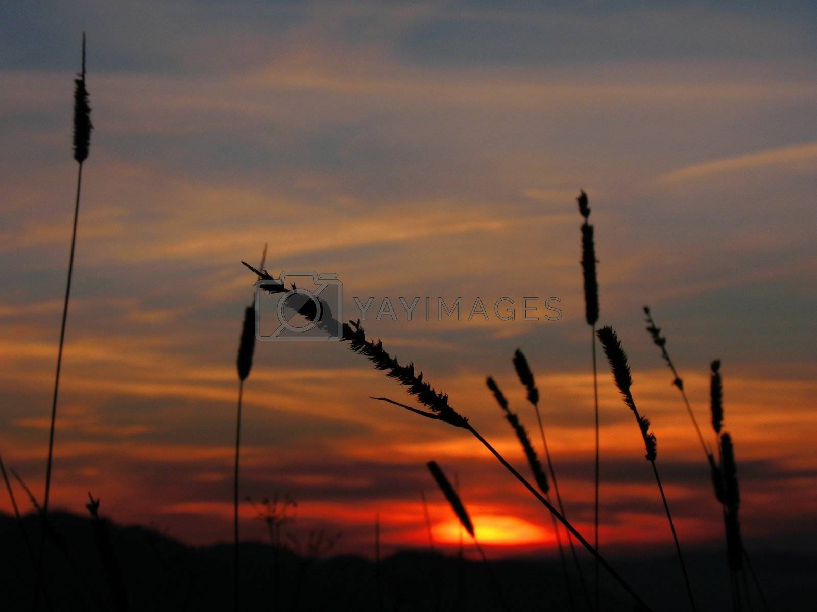 Sunset on the meadow by nature_art
