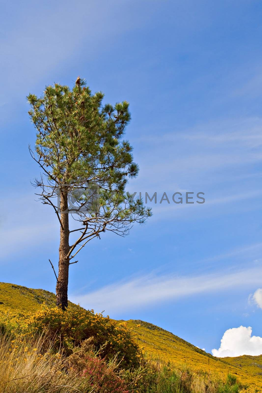 Lonely tree against blue sky.