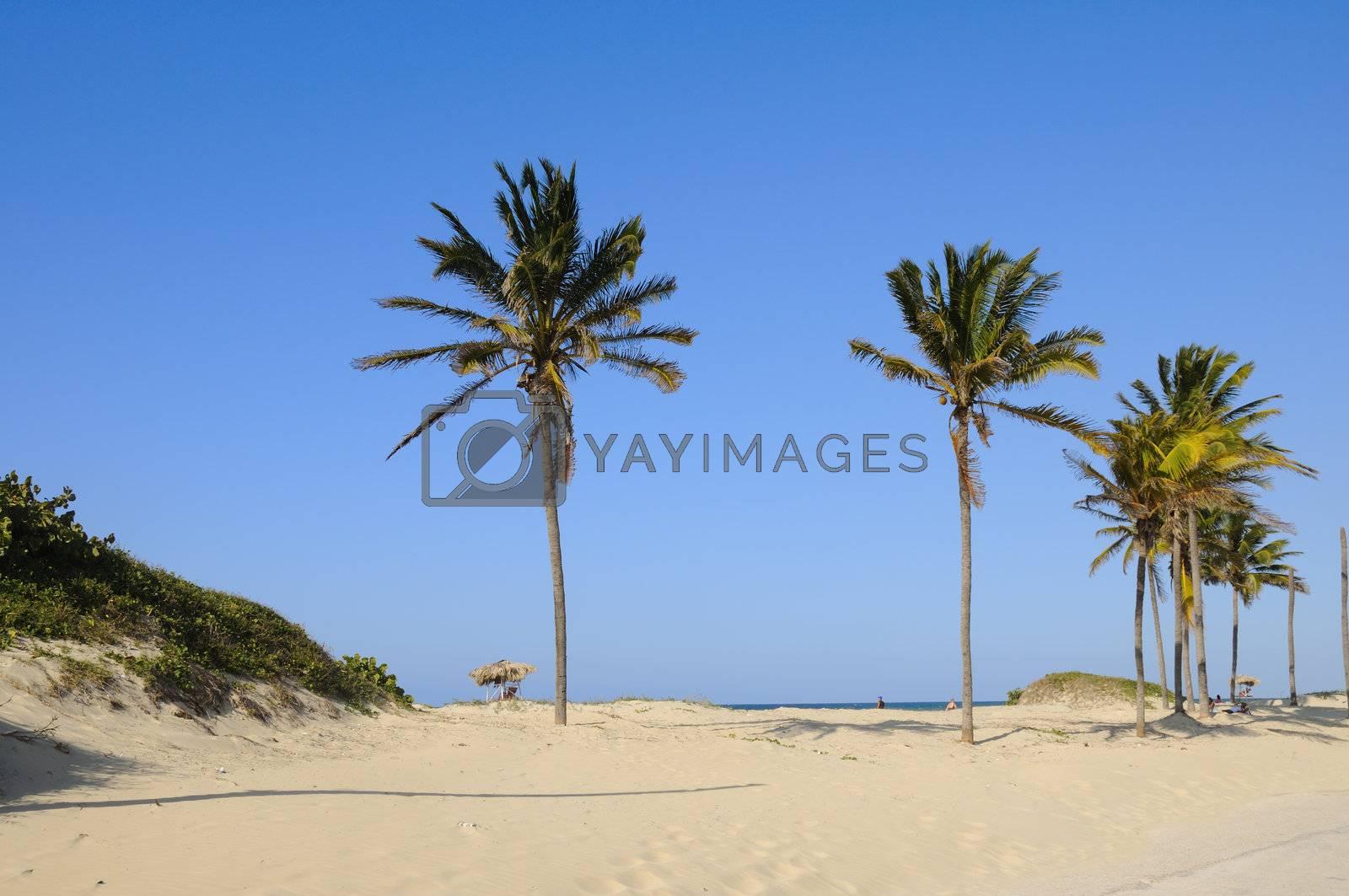 Tropical beach by rgbspace