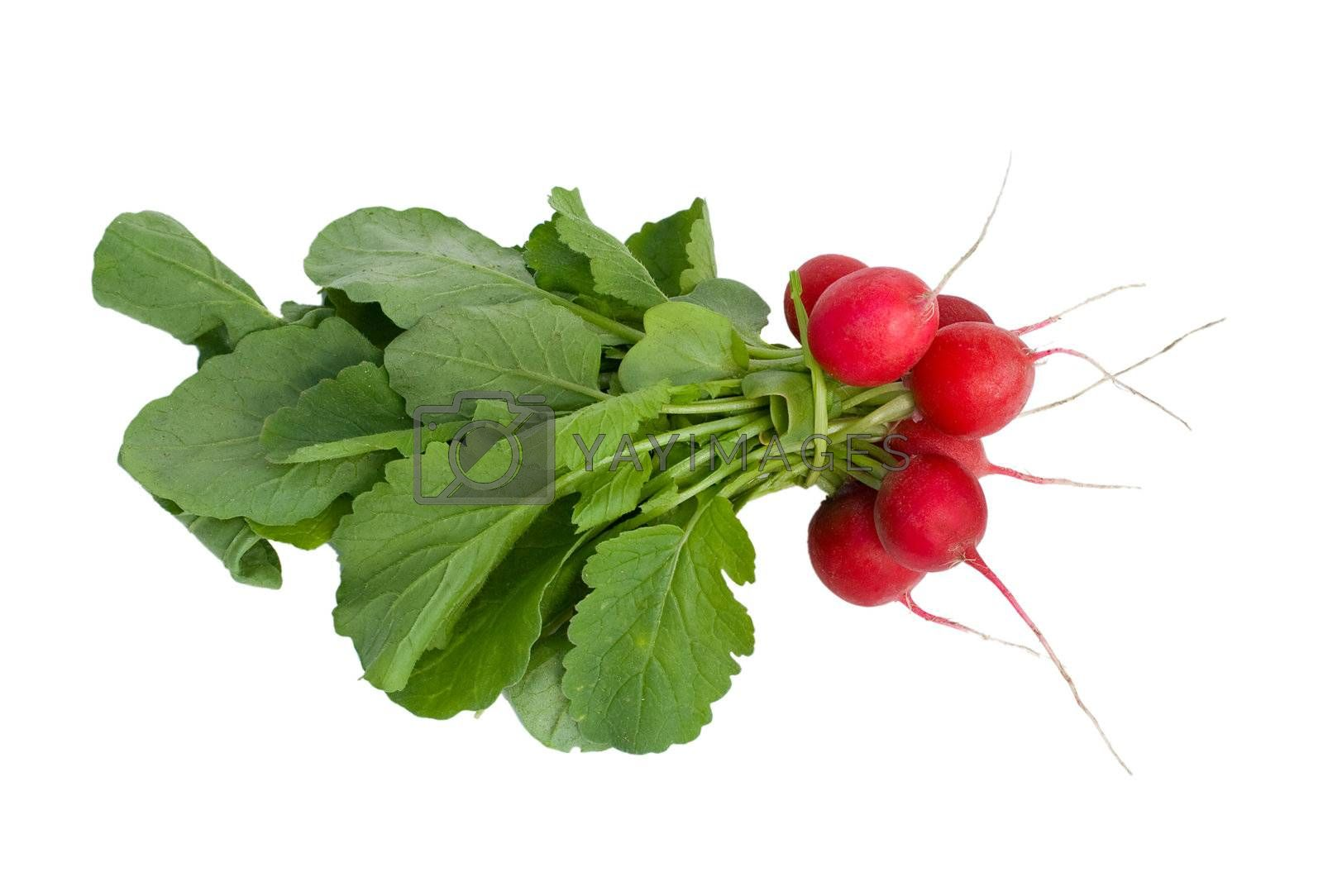 a bunch of red radish with leaves, isolated on white