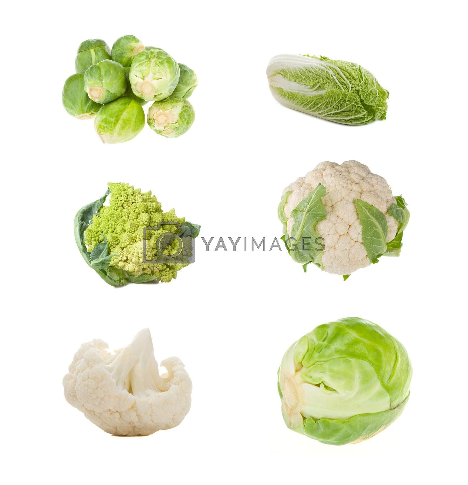 set of different sorts of cabbage, isolated on white