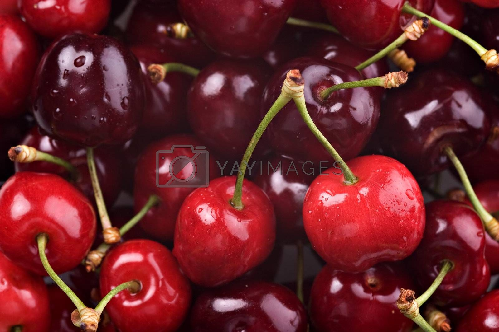 Photo of a bunch of Red cherries.