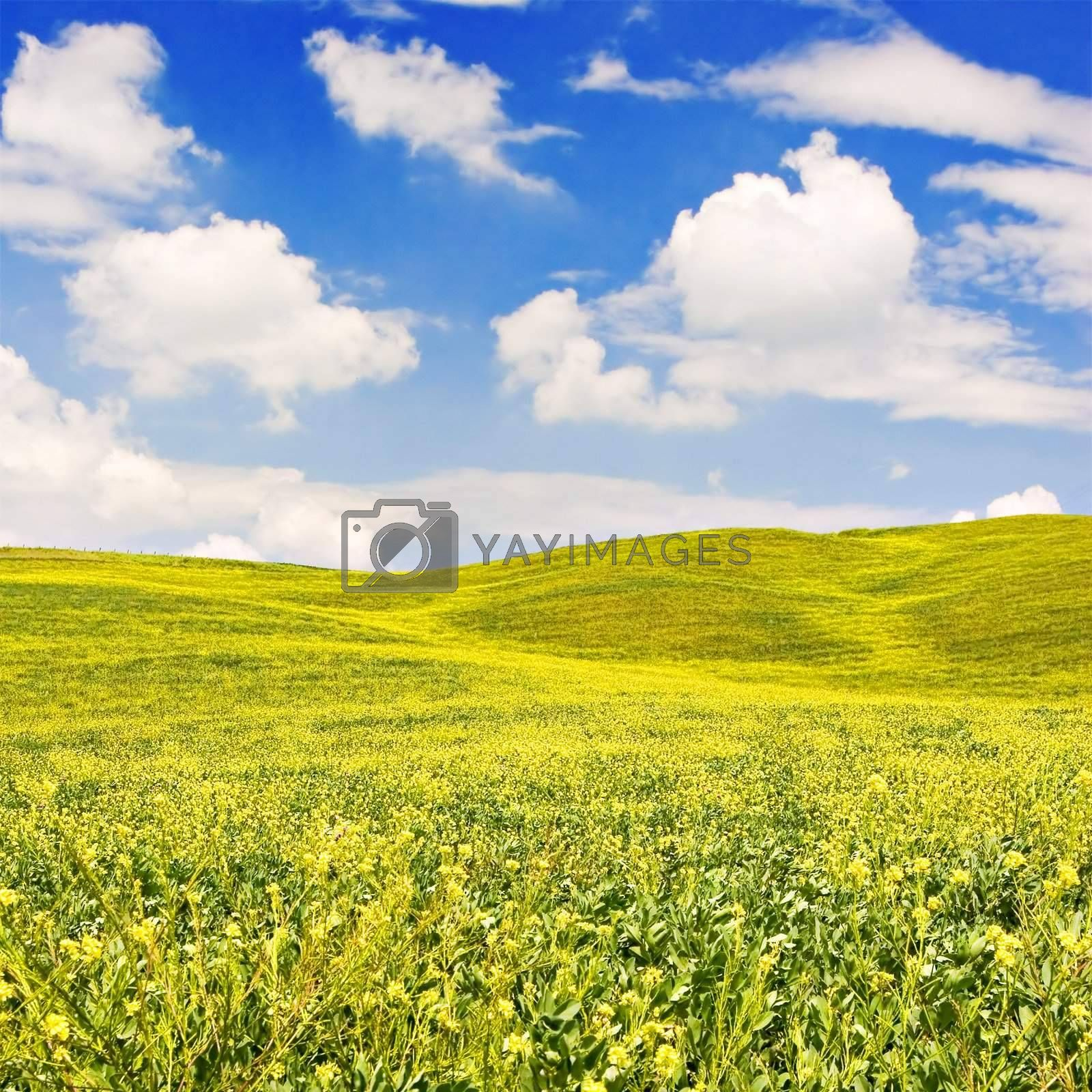Royalty free image of Flowered Landscape by ajn