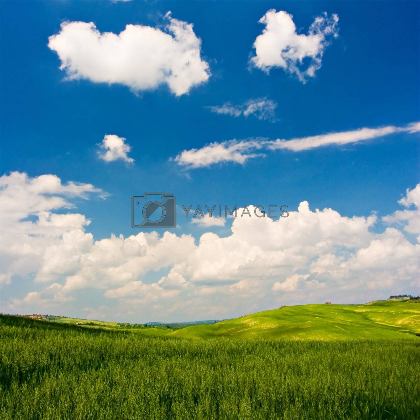 Landscape : Green field, deep blue sky and white fluffy clouds. Val D'Orcia - Tuscany, Italy