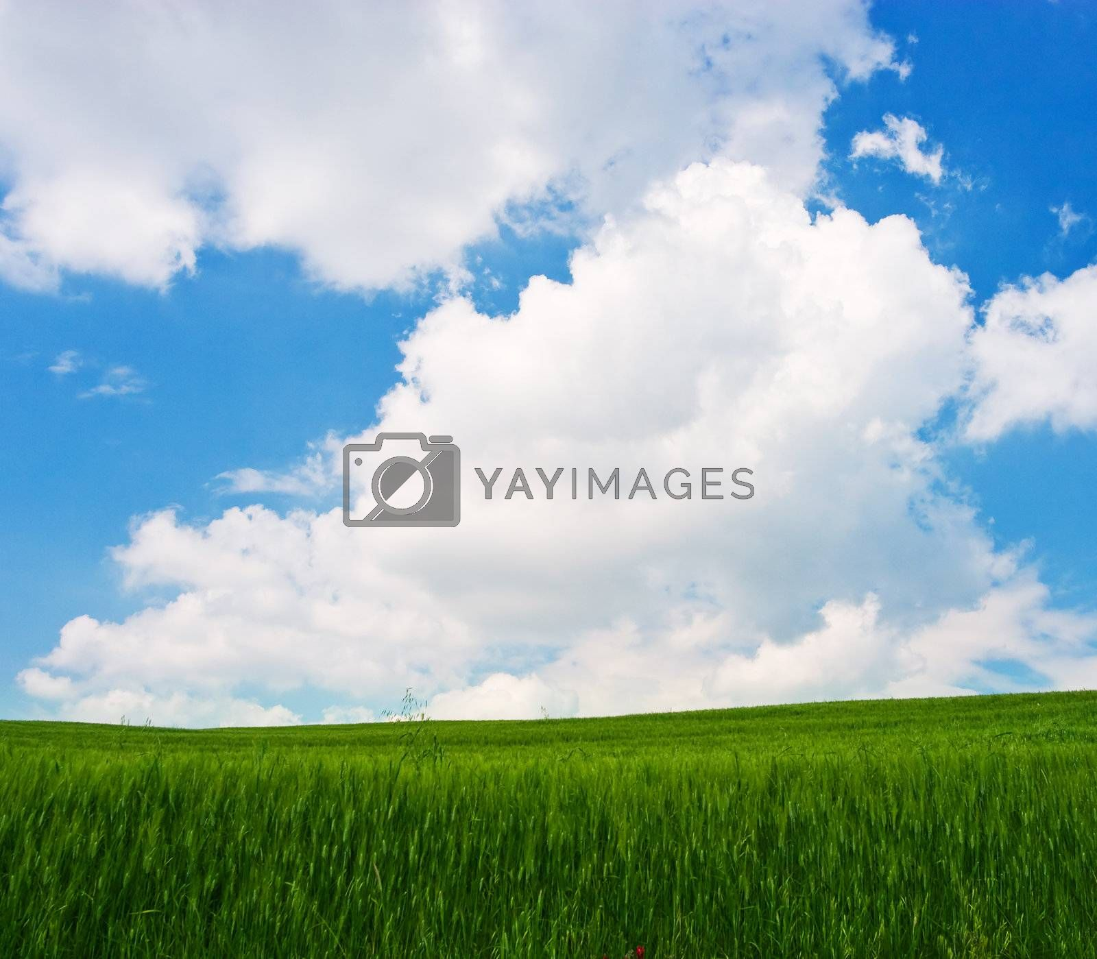 Flowered Landscape by ajn