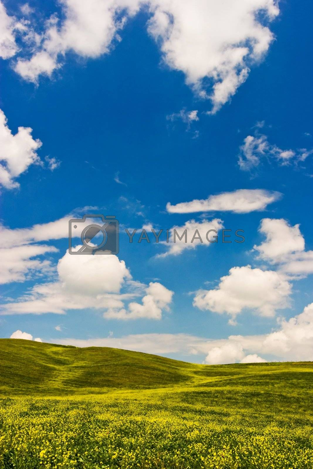 Landscape : Green field with yellow flowers, blue sky and big white fluffy clouds. Val D'Orcia - Tuscany, Italy