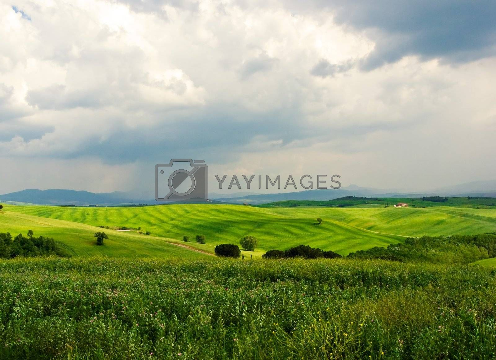 Typical Tuscan Landscape : Green field on a rainy day. Tuscany, Italy
