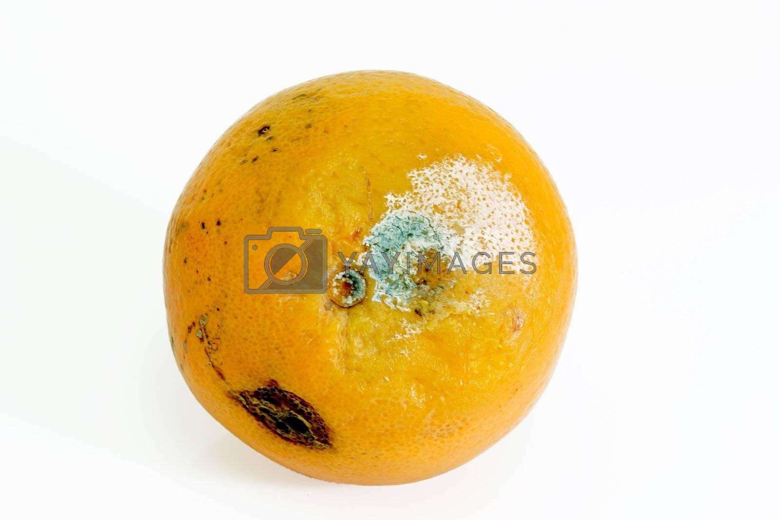 Mouldy orange by Teamarbeit