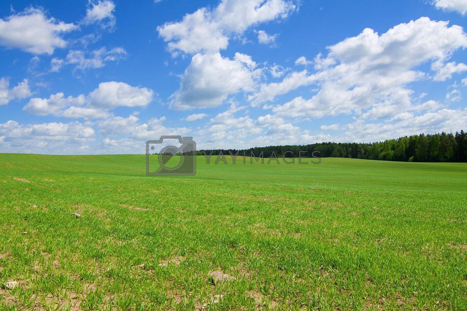 Green agricultural sow field with a blue sky
