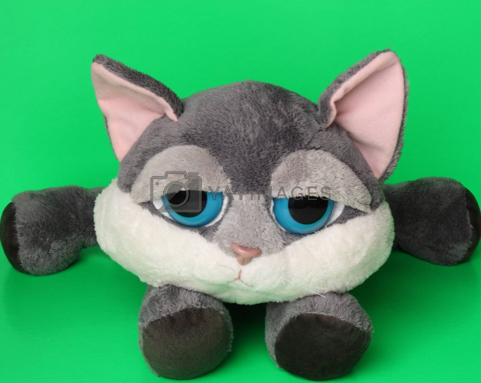 Soft baby cat toy on a green background