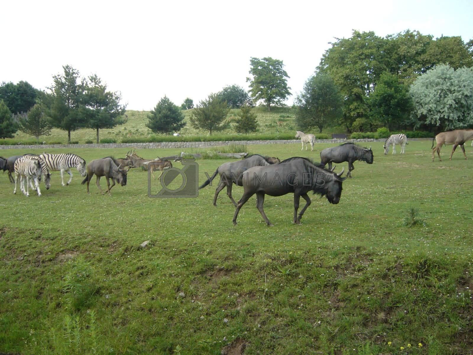 wild animals seen in zoo safari, like in africa