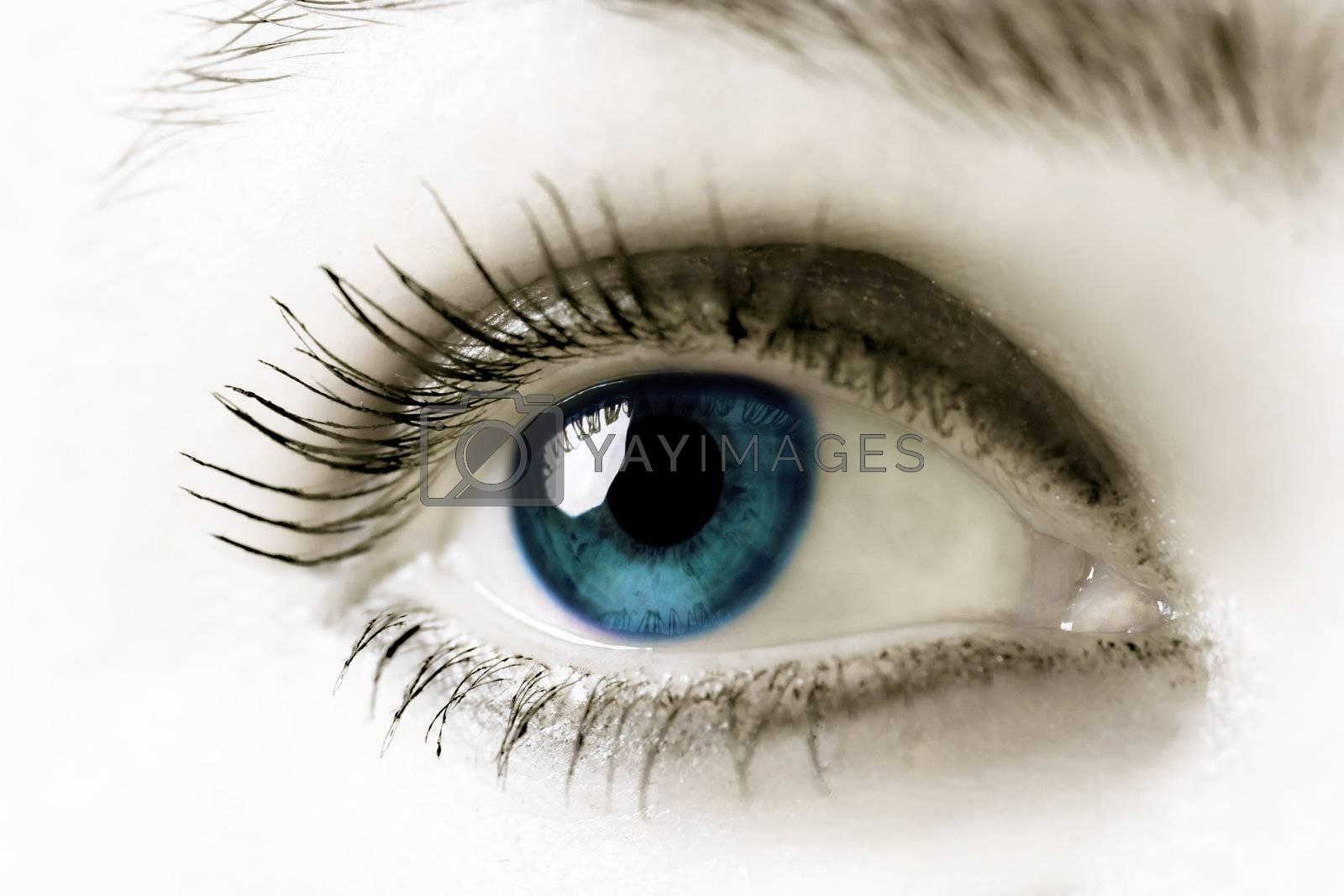 Blue eye. Extreme close-up. High key.