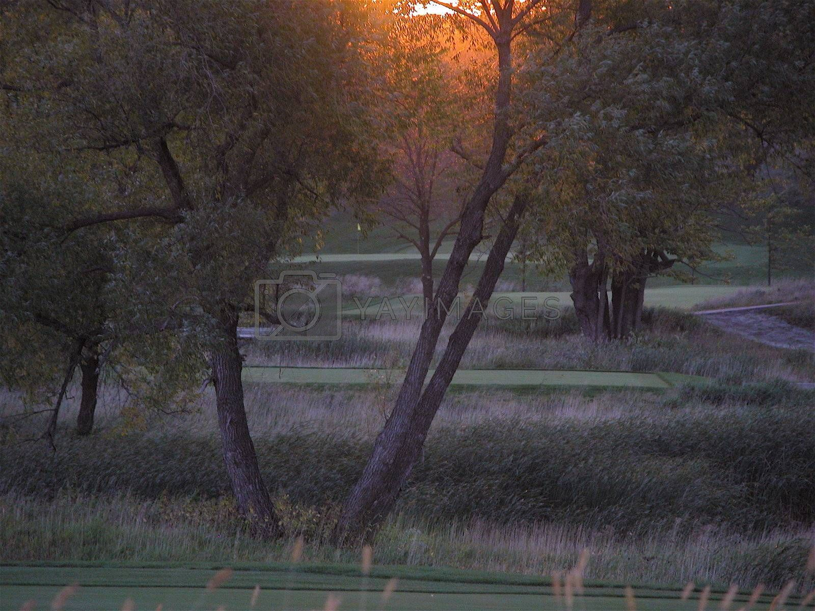 Golf green and tee box peeking though trees as sun is setting