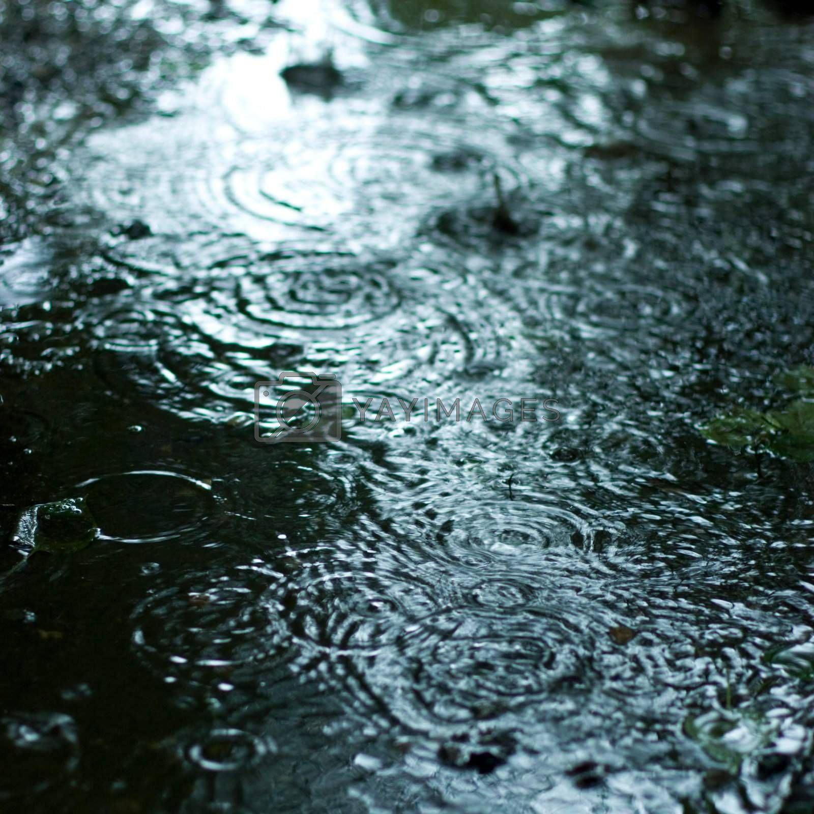 Rain drops rippling background