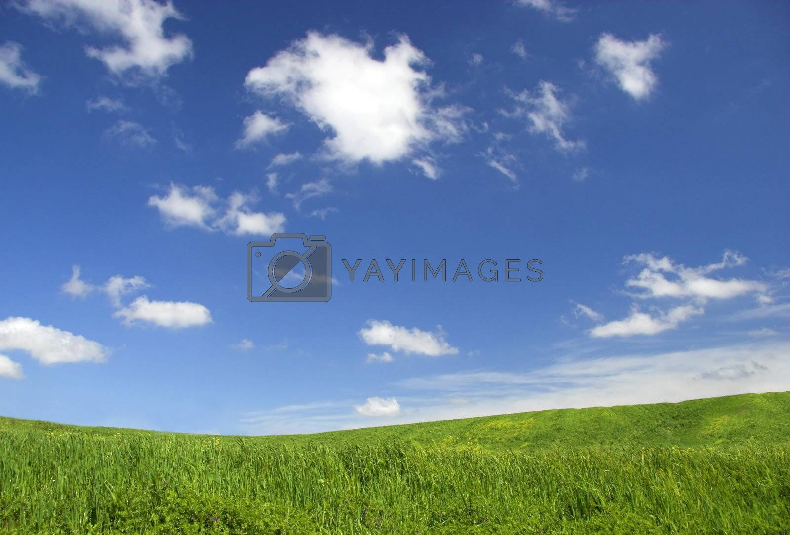 Green field landscape with a great blue sky