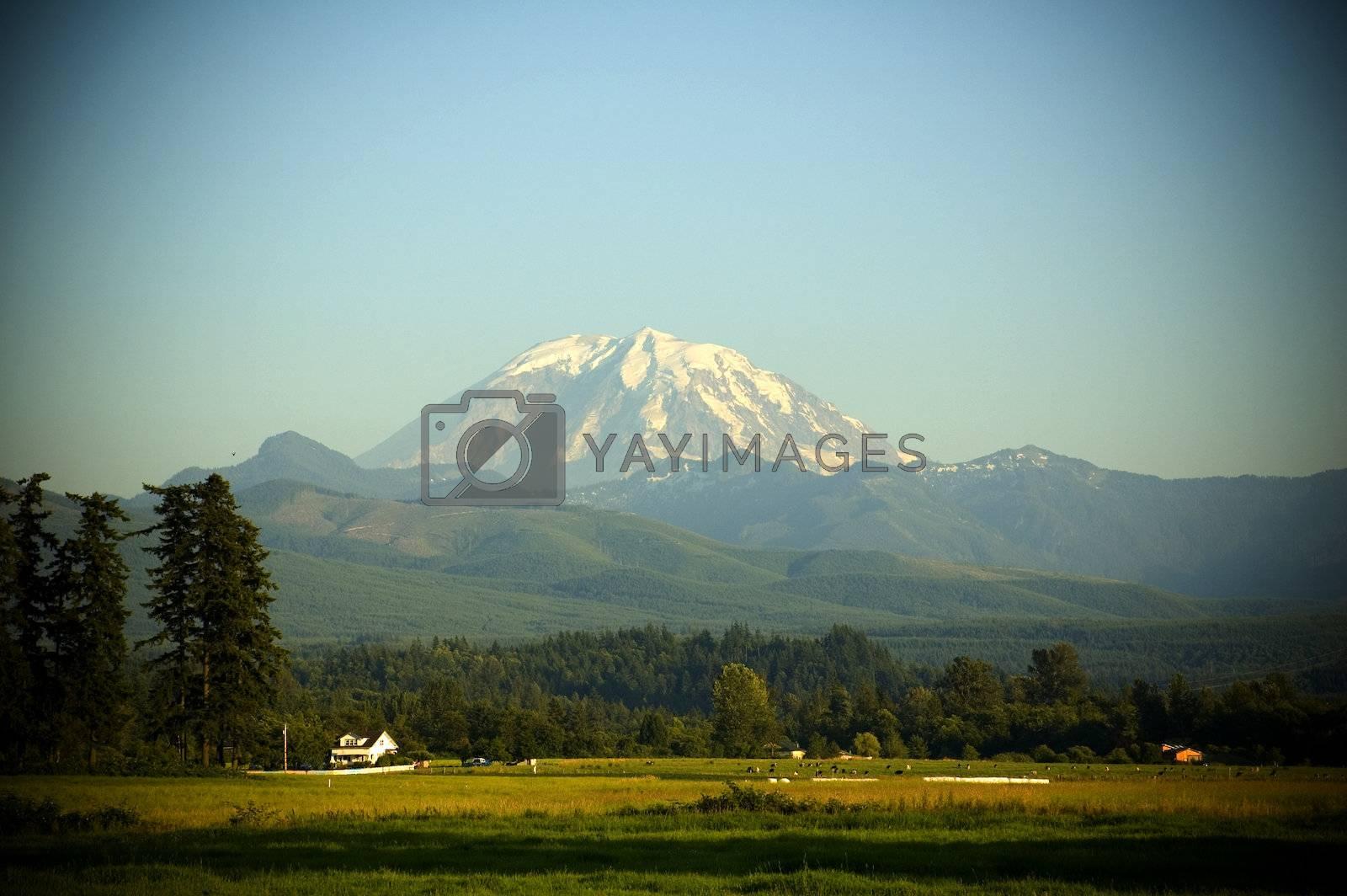 Mount Rainier towers over a picturesque farm with farmhouse and cattle near Enumclaw, Washington.