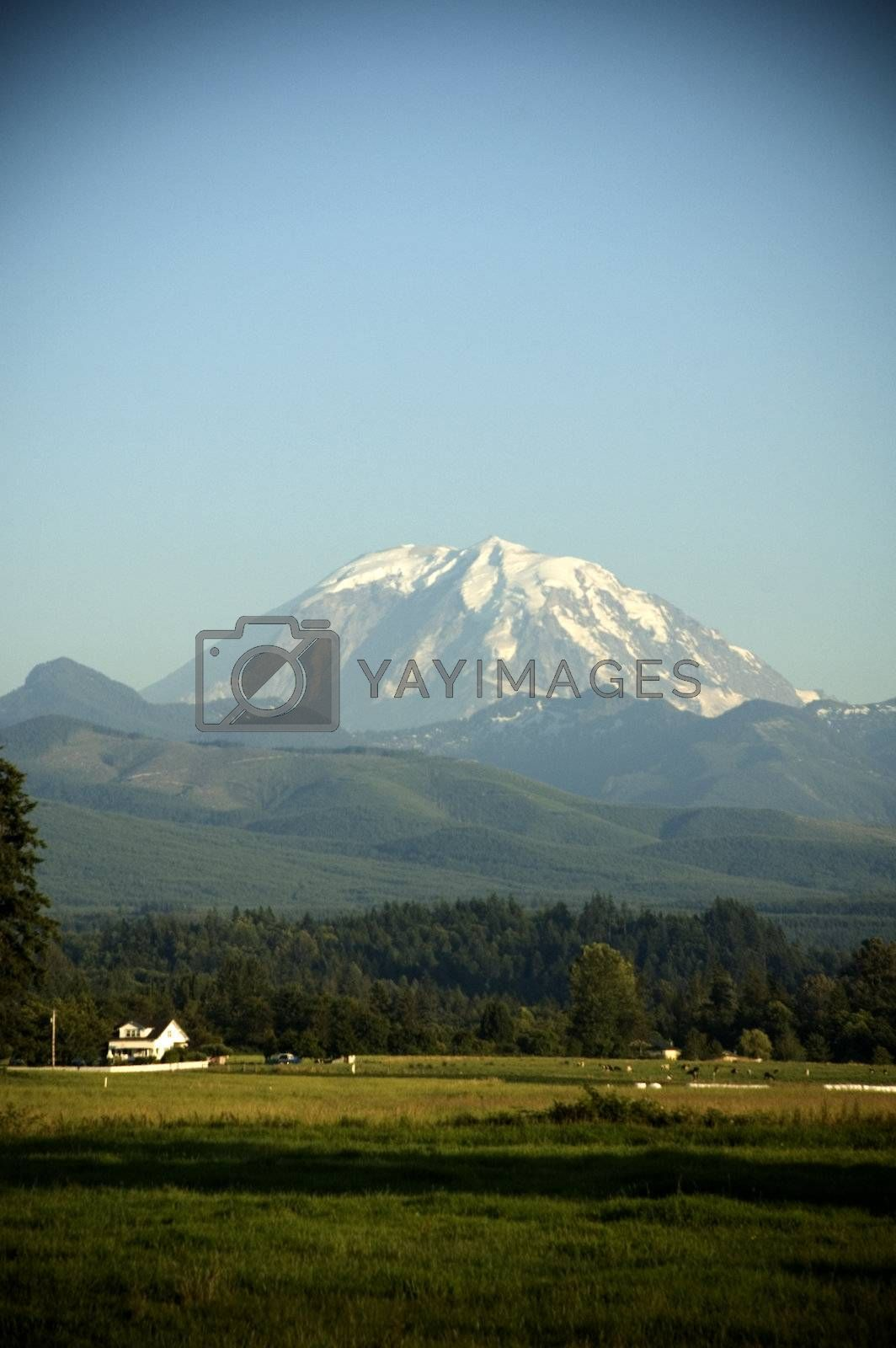 Mount Rainier towers over a picturesque farm with cattle and fields near Enumclaw, Washington.