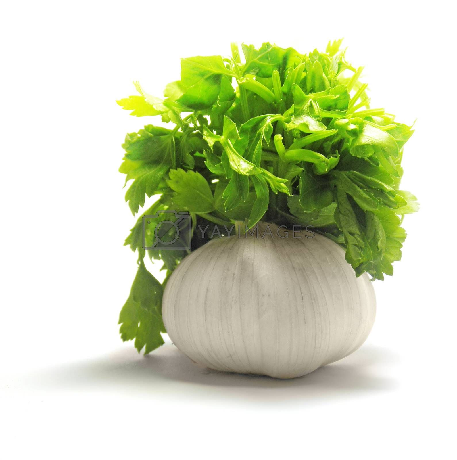 Fresh garlic with green parsley isolated on white