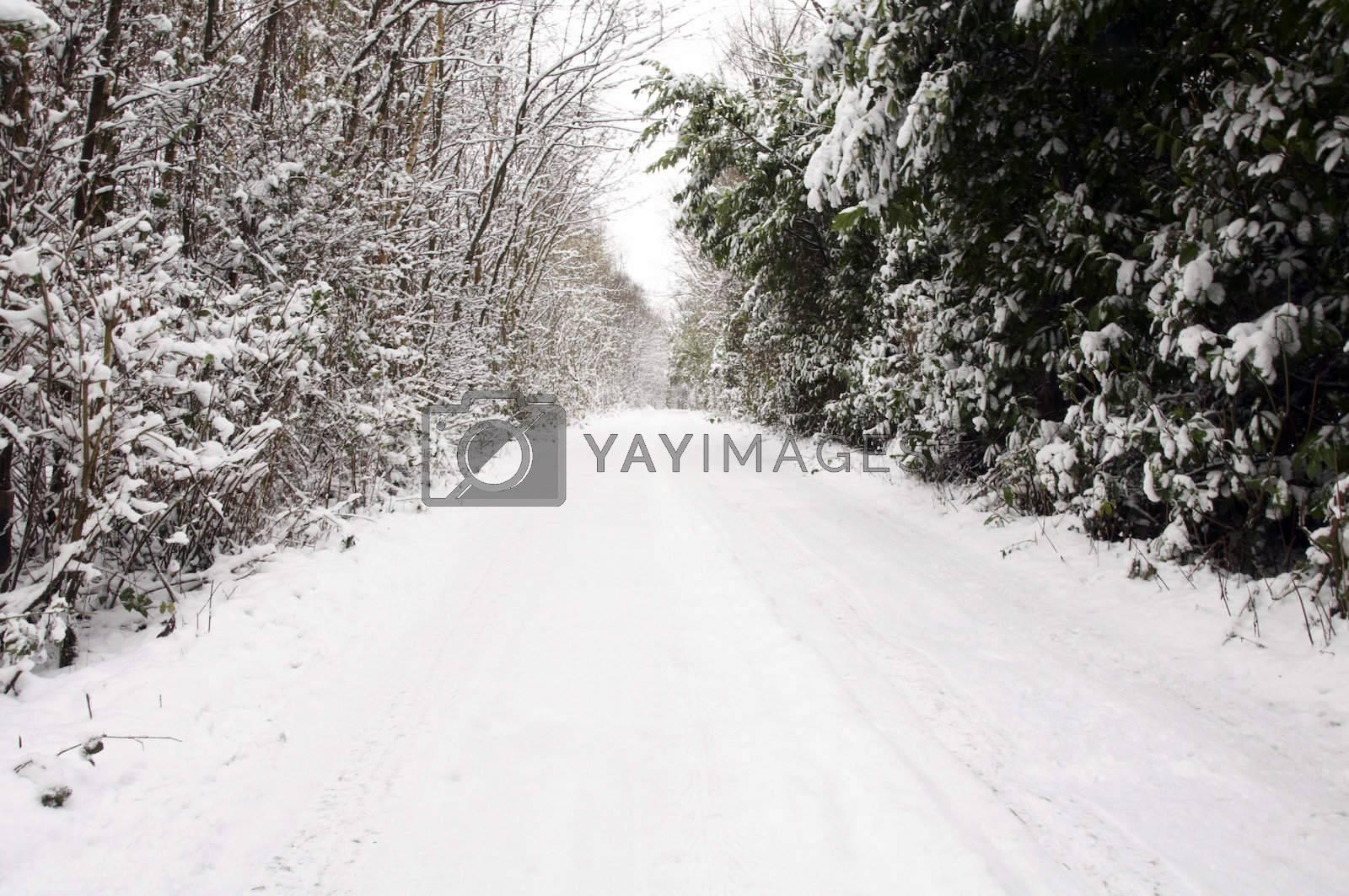 Winter by mbtaichi