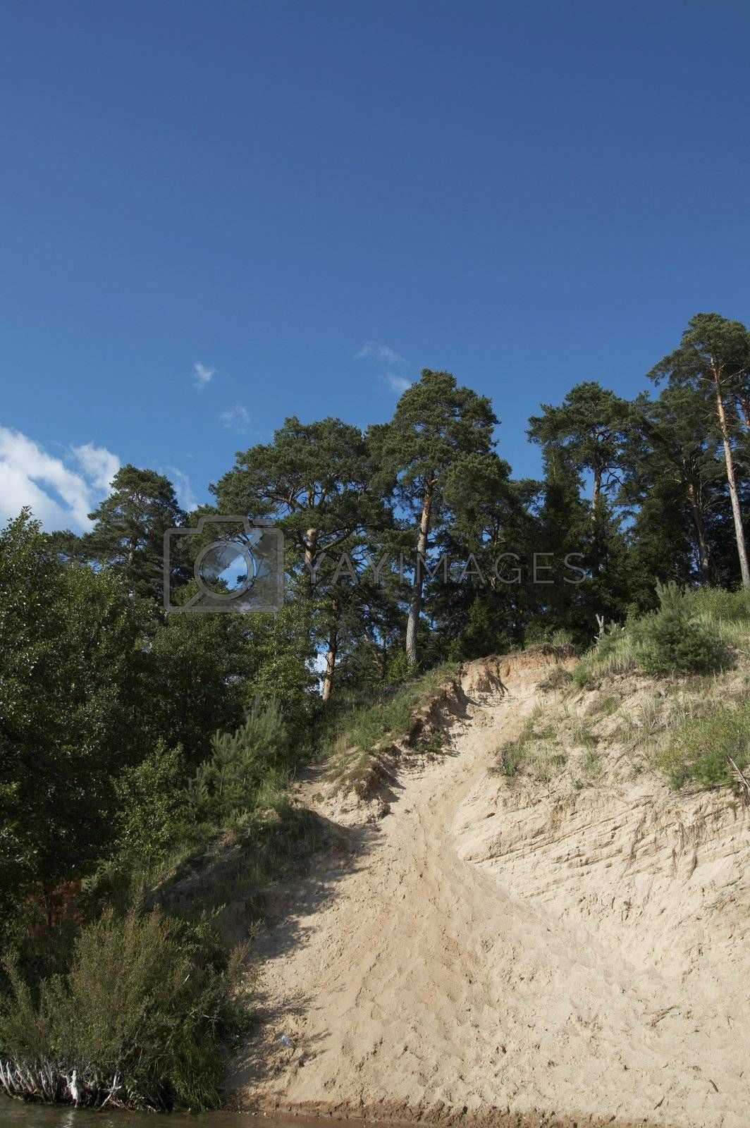 Pines on slope. Lithuania landscape with blue sky and clouds